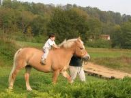 Passeggiate sui pony per i bambini.